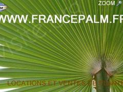 photo de Location de plantes en Vendee